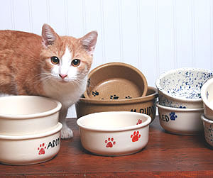Kitty and Ceramic Pet Bowls